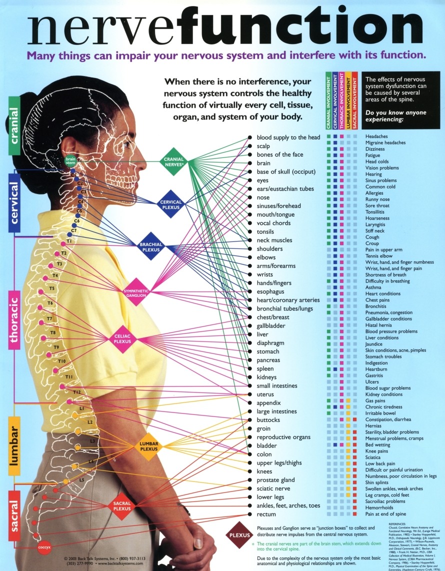 Nerve function charts